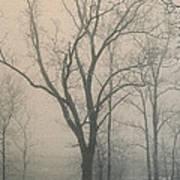 Ohio Winter Solitude Poster