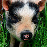 Oink-ing It Up... Poster