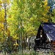 Old Cabin In The Golden Aspens Poster by Donna Parlow
