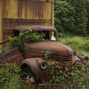 Old Truck In Rain Forest  Poster