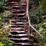 Old Wet Stone Steps Poster