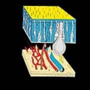 Olfactory Epithelium, Artwork Poster