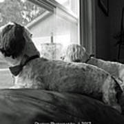 On The Lookout  Poster