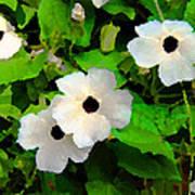 One Eye White Flower Poster