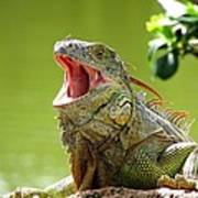 Open Mouth Iguana Poster