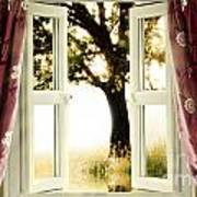 Open Window To Tree Poster