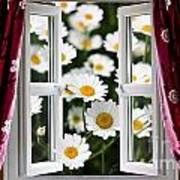 Open Windows Onto Large Daisies Poster