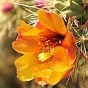 Orange And Yellow Cactus Flower Poster
