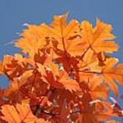 Orange Autumn Leaves Art Prints Blue Sky Poster