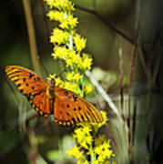 Orange Butterfly On Yellow Wildflower Poster