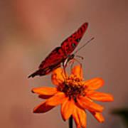 Orange Butterfly Orange Flower Poster