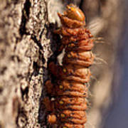 Orange Caterpillar Poster