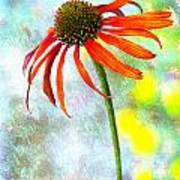 Orange Coneflower On Green And Yellow Poster