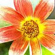 Orange Dahlia On Green Poster