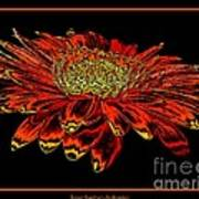 Orange Gerbera Daisy With Chrome Effect Poster