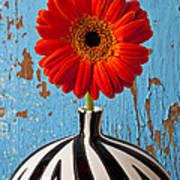 Orange Gerbera Mum Poster