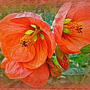 Orange Hibiscus Flowers Poster