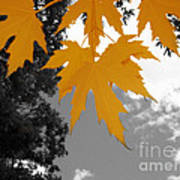 Orange Maple Leaves Poster