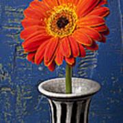 Orange Mum Poster by Garry Gay