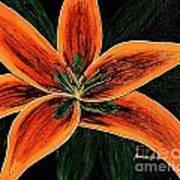 Orange Oriental Lily Poster