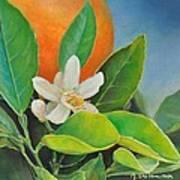 Orange Posee Poster