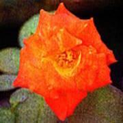 Orange Rose Blossom Poster