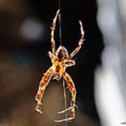 Orange Spider Poster
