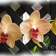Orange Striped Orchids Poster