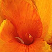 Orange Twist Poster by Susan Herber