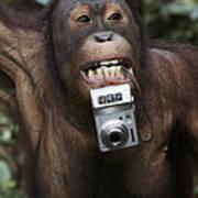 Orangutan With Tourists Camera Poster