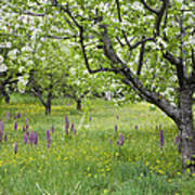 Orchard With Flowering Orchids Poster
