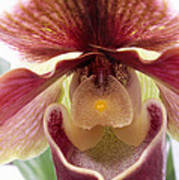 Orchid Interior Poster