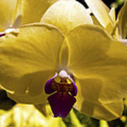 Orchid Study Vi Poster