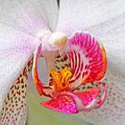 Orchids 10 Poster by Becky Lodes