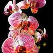 Orchids 2 Poster