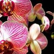 Orchids 3 Poster