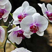 Orchids For Your Day Poster