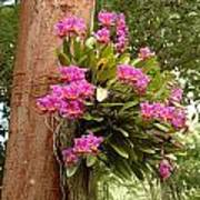 Orchids On Tree Poster