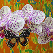 Orchids With Speckled Butterfly Poster