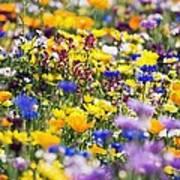 Oregon Wildflowers Poster