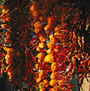 Organically-grown Peppers Are Hung Poster