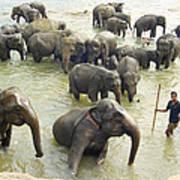 Orphaned Elephants Poster