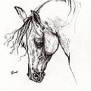 Ostragon Polish Arabian Horse 1 Poster