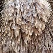 Ostrich Fluff Poster