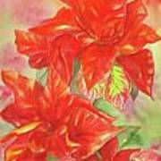 Other Poinsettia Poster