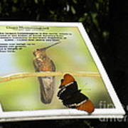 Outbound Butterfly Poster