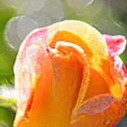 Paint Daub Yellow Rose Poster