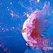 Paintball Hitting An Egg Poster