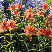 Paintbrushes Wildflowers Rainier National Park Poster