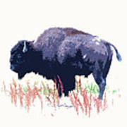 Painted Buffalo Poster